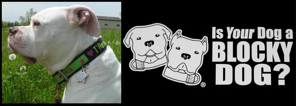 Custom dog collars made in the U.S.A.