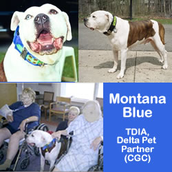 montana collage